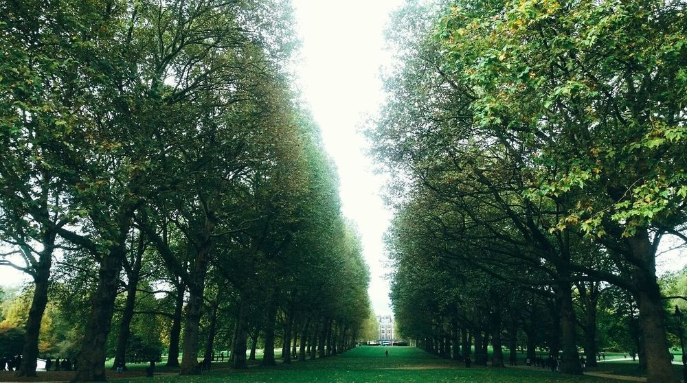 Beauty In Nature Day Green Color Growth London Parks Low Angle View Nature Outdoors Park Scenics St James Park London  Tranquility Tree