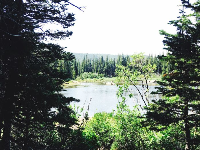 Tree Forest Nature Growth No People Water Tranquil Scene Tranquility Day Scenics Beauty In Nature Plant Outdoors Lake Clear Sky Sky Colorado Rosevelt National Forest Glacier Lake And Trees
