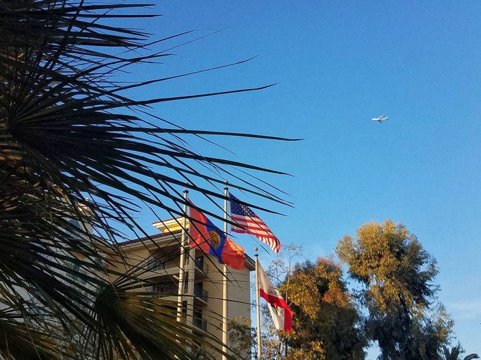 Coming or Going Low Angle View No People Architecture Sky Patriotism Clear Sky Building Exterior Built Structure Outdoors Day Nature Plane Palm Tree Layers Look Up Take Off Landing Los Angeles, California