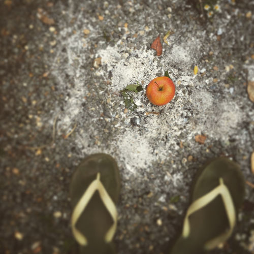 Ageing Ageing Fruit Apple Over Ashes Art Ashes Of Artwoirk Day Flip-flops Food High Angle View No People Old Apartment Orange Color Out Of The Ashes Outdoors Phoenix Rising Rubber Sandals Selective Focus Tilt And Shift War Zone Apple