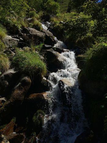 River High Mountain Treking Water Pirineos Nature Wildlife Catalunya Lleida Green
