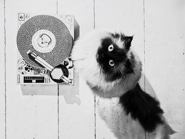 Caught In The Moment Pets Domestic Animals Animal Themes One Animal Product Photography Product Placement Cats Of EyeEm