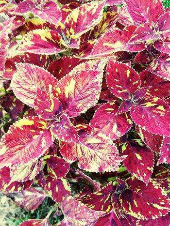 Flower Backgrounds Full Frame Leaf Close-up