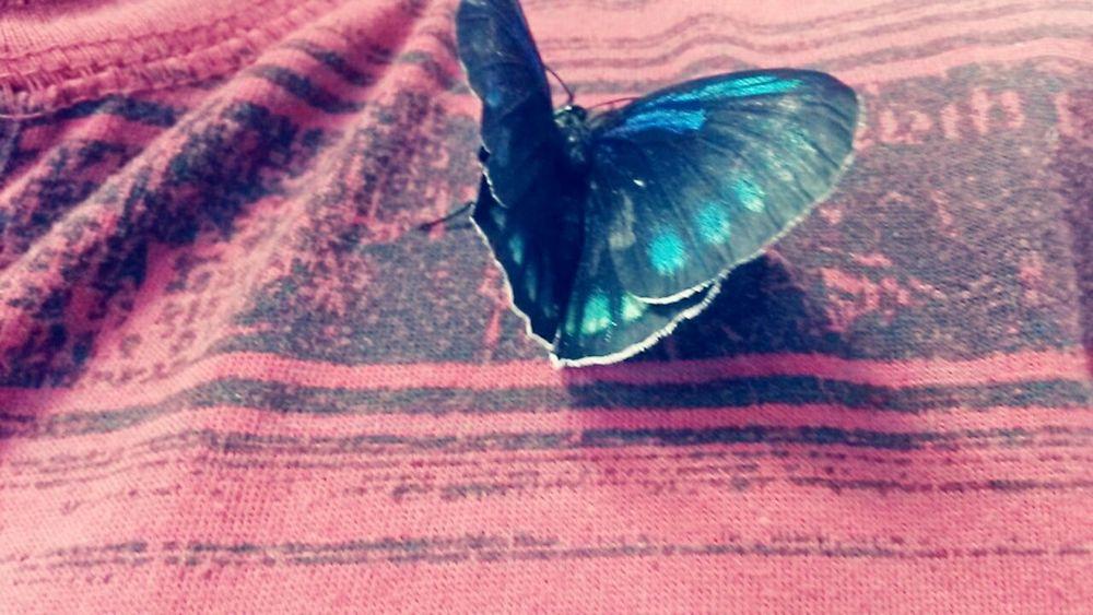 Mariposa Gusano Evolucionando Colors Torbasol EyeEm Best Shots