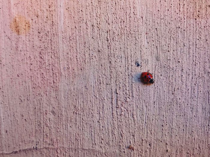 EyeEm Best Shots EyeEm Gallery Eye4photography  EyeEm Nature Lover Insect No People Red Invertebrate Insect Animal Wildlife Ladybug Animals In The Wild Textured  Day Nature Outdoors Close-up Full Frame High Angle View Wall - Building Feature