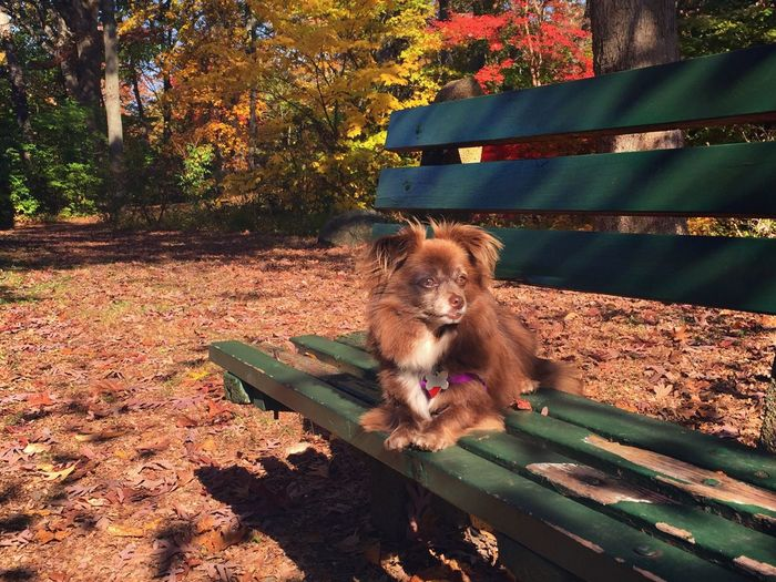 Dog sitting on autumn leaves