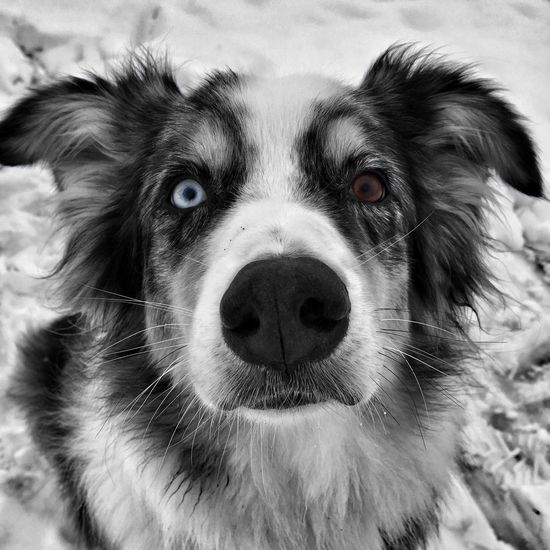 Special day with a special friend 💕 EyeEmNewHere Different Eye Color Blackandwhite Dog Pets Looking At Camera Domestic Animals One Animal Animal Themes Portrait No People Outdoors