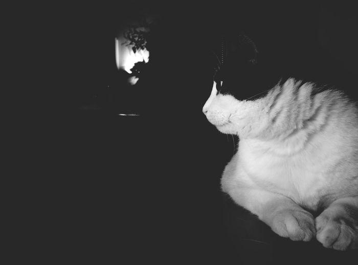 Cat Cat Content Cats Of EyeEm