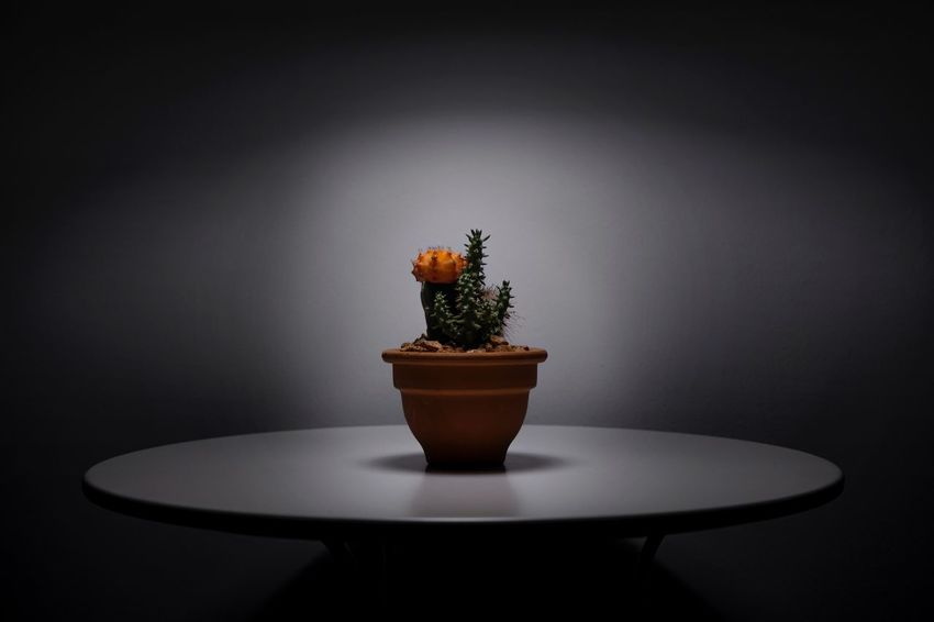 No spikes had scared me before. I know you're mushy on the inside. Eye4photography  EyeEm Nature Lover EyeEm Gallery EyeEm Best Shots Cactus Indoors  Table Plant Potted Plant No People Nature Food And Drink Growth Freshness Copy Space Decoration Simplicity
