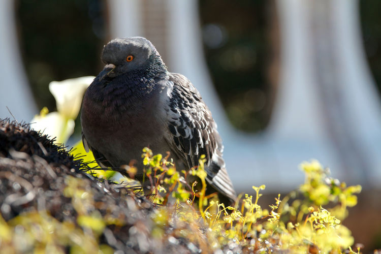 Close-up of pigeon perching on plant