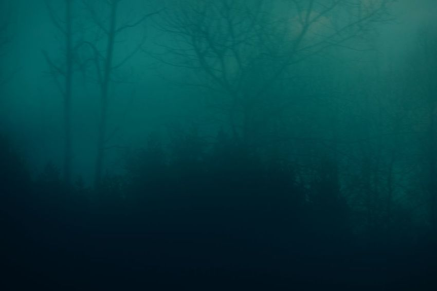 Fog Spooky No People Nature Outdoors Morning Road Trees Tranquility Minimalism Blau Lost In The Landscape