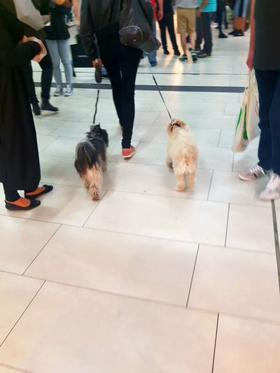 People People Walking  Headless Headless_collection Two Dogs Woman With Dog Rush Hour Central Reilway Station People Photography City Life My City Citylife Walking Summertime Dogs Two Dogs From Behind Eyeem Collection Two Is Better Than One People_collection People Walking  Galaxy S7 Edge