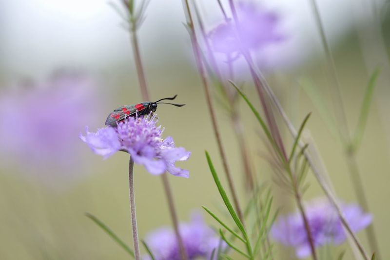 """Purple Cloud"" Flower Insect Animal Themes Animals In The Wild Plant One Animal Nature Fragility Petal Beauty In Nature Growth No People Close-up Purple Day Flower Head Freshness Focus On Foreground Outdoors Animal Wildlife Michael Hruschka Makro Macro Canon Insects"