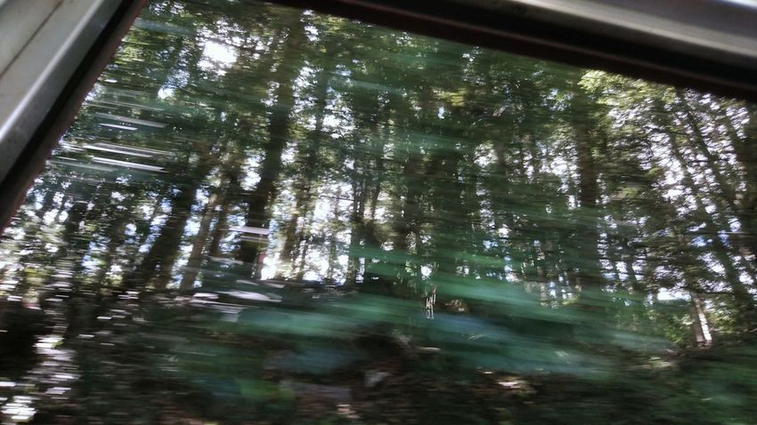 Trees Silhouettes From Train Window Low Angle View Beauty In Nature Relaxing Relaxing Moments Capture The Moment Beauty In Nature Trees And Nature Silhouette Light And Shadow Moving On Looking To The Other Side Perspective Nature Photography 電車旅 車窓から