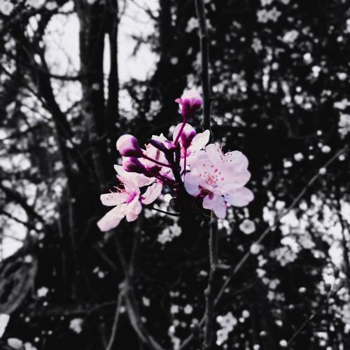 Flower Blois The Secret Spaces Art Is Everywhere EyeEm Diversity Travel Photography EyeEmNewHere No People Beauty In Nature