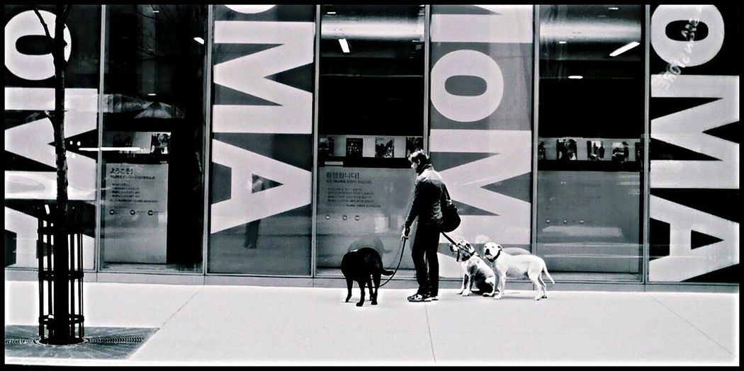 Moma N.Y. Straight out from black&white film camera, Nikon Fm2