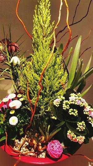 Little Garden Eden Nature Beauty In Nature Flower Close-up Indoors