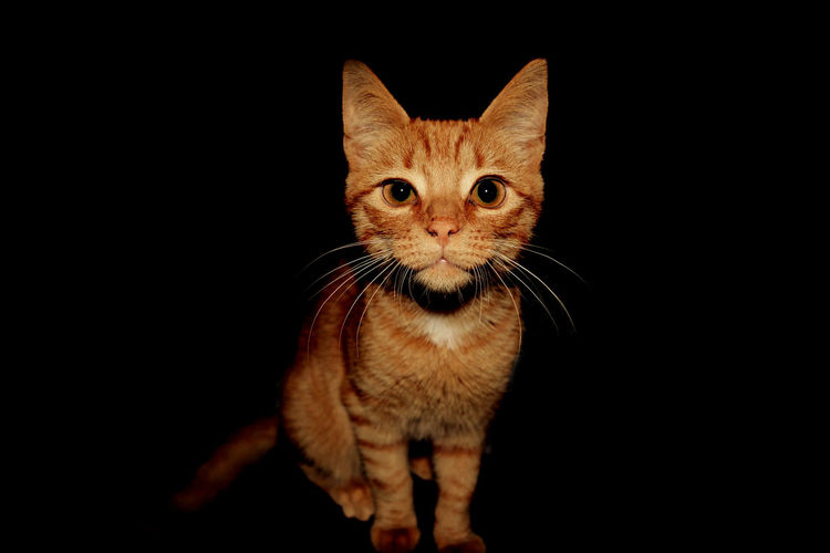 My cat is a model. Cute Beautiful Cat Cats Red Pets Animal Tiger
