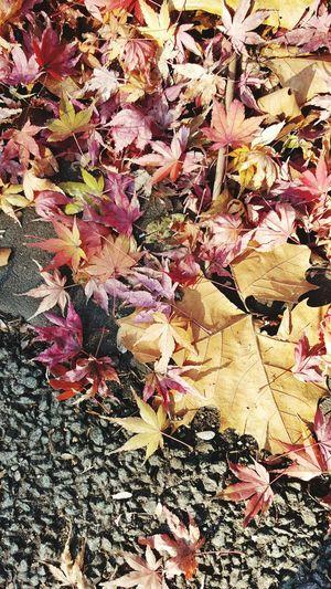 겨울 낙엽 Fallen Leaves Winter