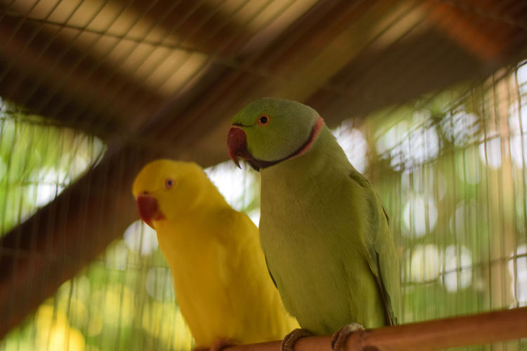 Two birds perching in cage