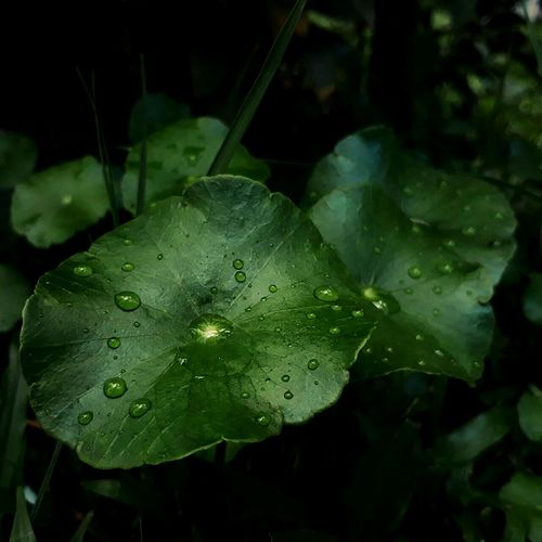 Nature Plant Leaf Beauty In Nature Green Color Growth First Eyeem Photo