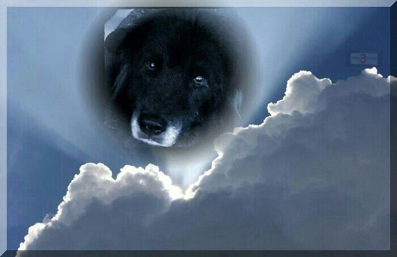 My Samson is in Heaven, Summerland,@ the Rainbowbridge, or he is already reincarnated. Rest In Peace Eternal Peace Relaxing