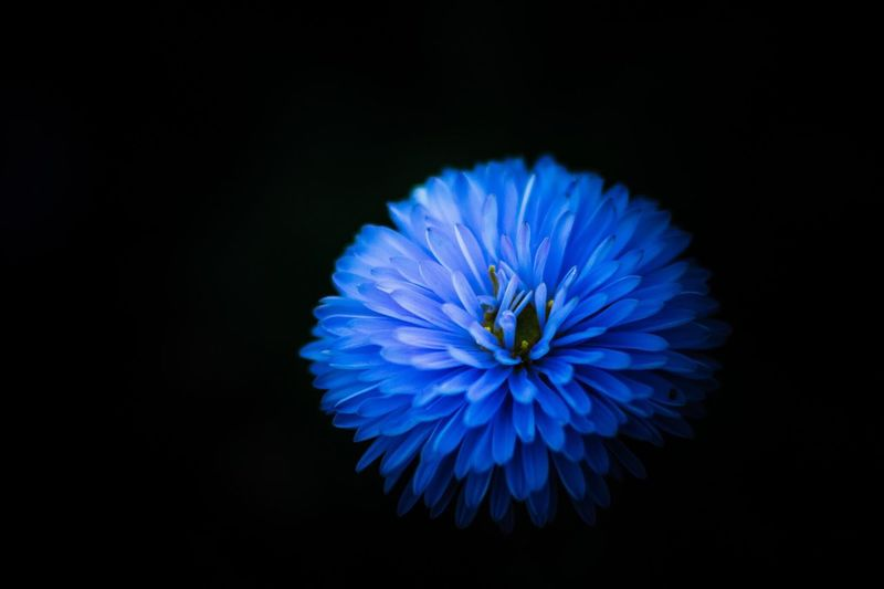 Summer blues.. Flower Nature Close-up Outdoors Fragility Hello World Blue Colours Details Creative Photography Check This Out Freshness Photooftheday Nikon Petal Blooming Macro Blue Color