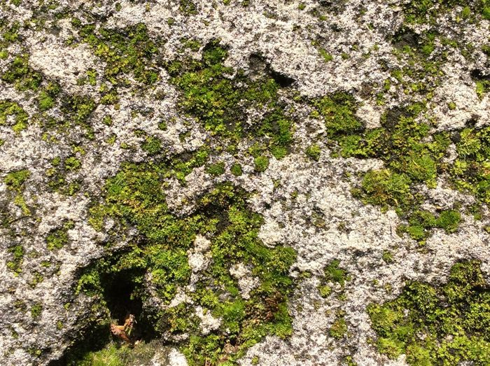 Taking photos at school 🏫 Re Wow!! Moss Nature