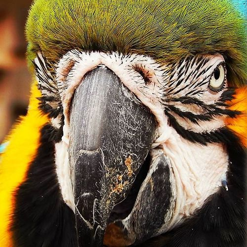 Who's a pretty (if you like that kind of thing) boy then! Kirkleyhall Wildlifephotography Northumberland_uk Wildbirds Macaw