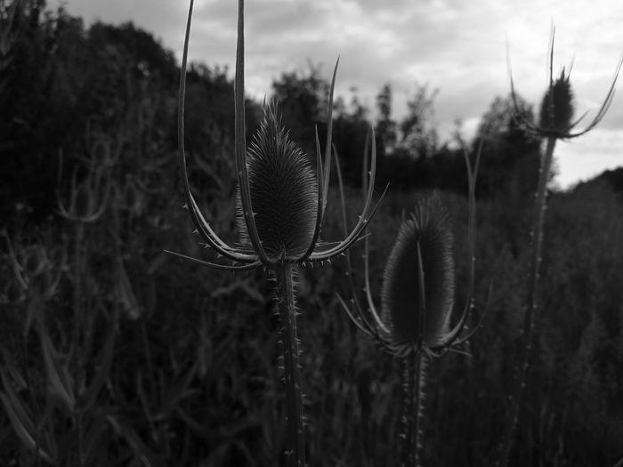 Nature Enjoying Life Suun🌞 Hello World Fields Macronature GERMANY🇩🇪DEUTSCHERLAND@ Hello World Nature_collection Blackandwhite Photography Blackandwhite Flower Collection Garden Flowers Monochrome Photography