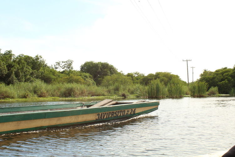 Green Green Green!  Guatemala Lanchas Nature Photography Fishing Boat People And Places Trees And Sky Water