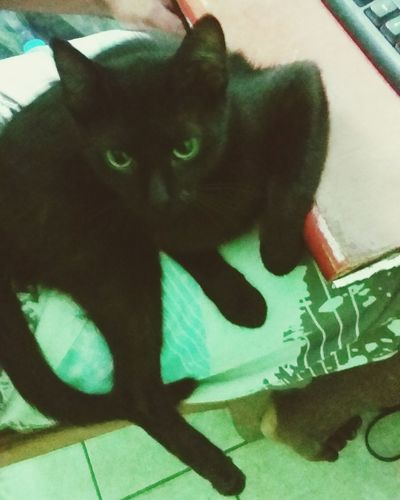 Cat Cats Cat♡ Cat Lovers First Eyeem Photo