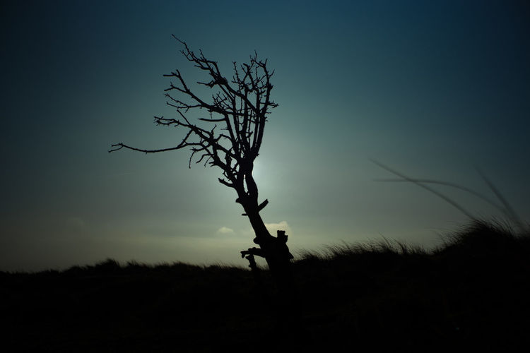 Nature Tree Bare Tree Branch Landscape Lone Nature Night One Person Outdoors People Silhouette Sky Tree