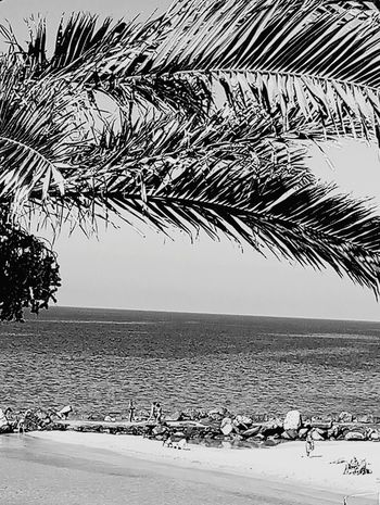 Beach Sea Sand Horizon Over Water Tree Water Nature Outdoors Blue Sky Scenics Beauty In Nature Palm Tree Day No People Black And White Friday