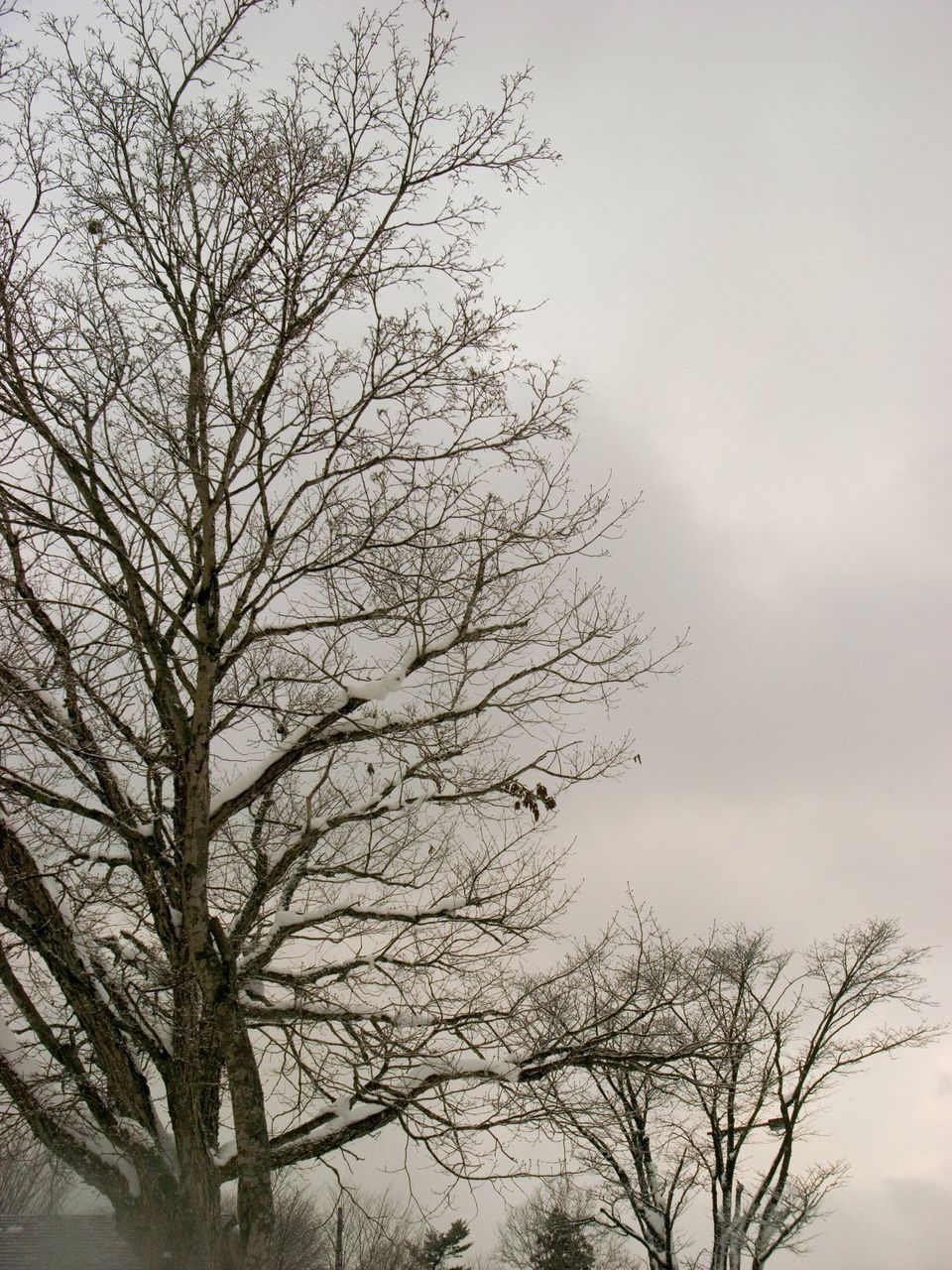bare tree, tree, low angle view, nature, sky, branch, outdoors, no people, beauty in nature, tranquility, day, scenics, clear sky