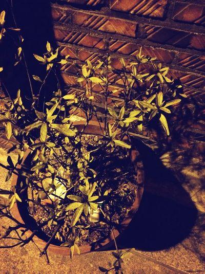 Flower 밤길
