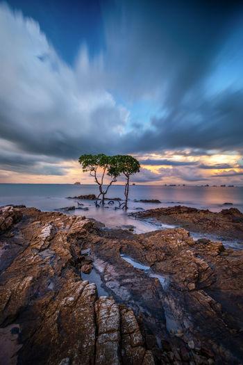 Couple Tree Sky