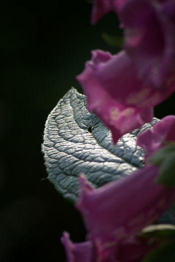 Macro Photography Mushrooms Nature Bird Flower Leaf Macro Sunshine Water