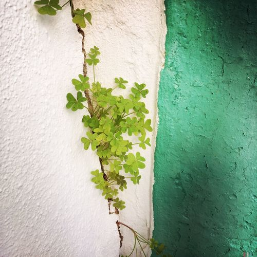 Green Mint White White Wall WILLPOWER Strength Plant Growth New Growth