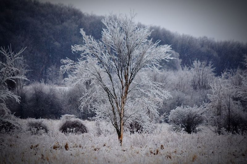 Plant Tree Cold Temperature Beauty In Nature Winter Nature Snow Growth Land Outdoors Environment White Color Coniferous Tree No People Day Sky Tranquility Frozen Field Tranquil Scene