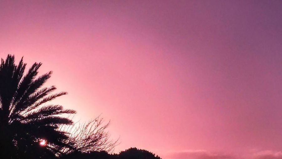 La vie en rose. Tree Sky Nature Pink Color Silhouette Beauty In Nature No People Outdoors Illuminated Scenics Photography Photo Landscape Nature Picture SPAIN Naturaleza Canarias Picoftheday Canary Islands Lanzarote Beauty In Nature España🇪🇸 Cielo The Great Outdoors - 2017 EyeEm Awards