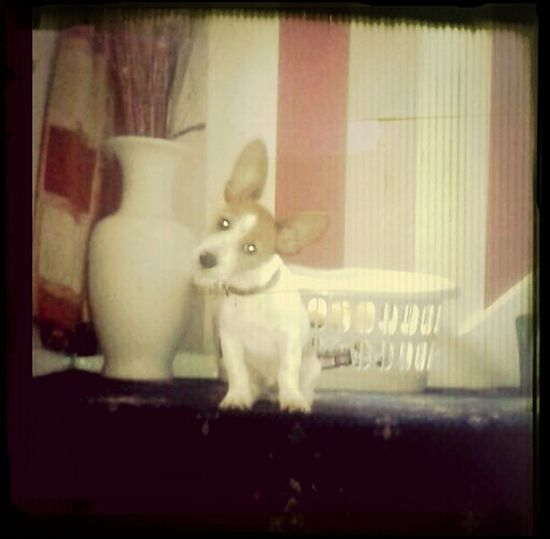 My wee baby. Maxypoos ? Pet Photography  First Eyeem Photo