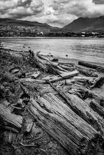Sky Cloud - Sky Water Wood - Material Tranquil Scene Environment Nature Tranquility Land Scenics - Nature Beach Day No People Wood Log Timber Beauty In Nature Non-urban Scene Landscape Outdoors Pollution Driftwood