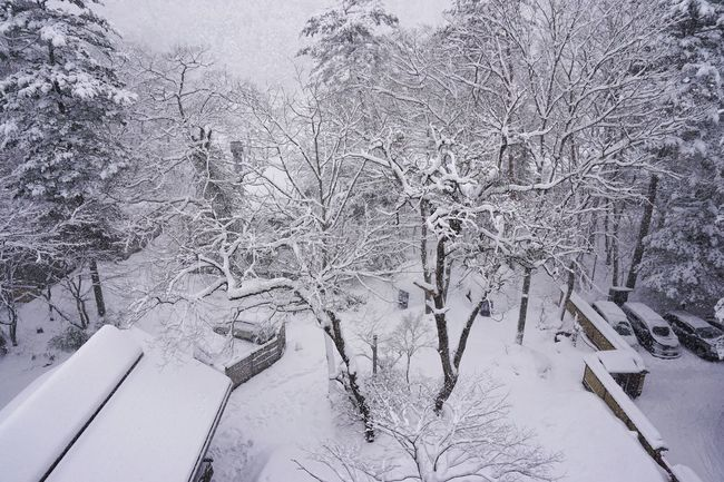 2017 BareTrees Cold Temperature Hana To Hana Ice Japan Landscape Nature Scenics Snow Snowing Tochigi Tree White Winter 栃木 花と華 Yunishigawa