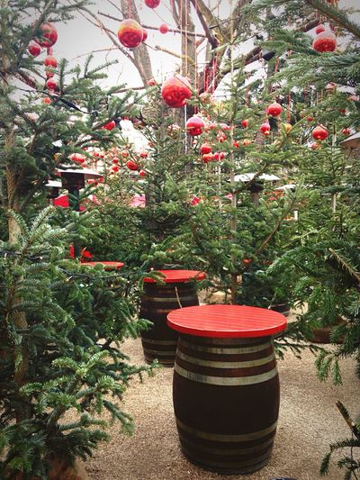 Christmas Decorations Chtistmas Tree Bolzano - Bozen Red Alto Adige South Tyrol Suedtirol
