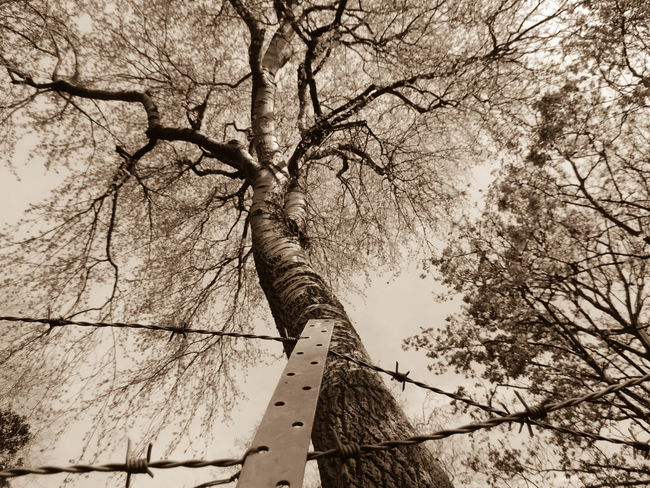 My Neighborhood at a glimpse - Beautiful , thriving and pleasant. But still we don't trust each other. Still we need to protect such beauty from everybody else. Barbed Wire Bare Tree Beauty In Nature Branch Cropped Danger Day Growth Low Angle View Nature No People EyeEm Best Shots The Great Outdoors - 2016 EyeEm Awards Security Sepia Sky Tranquil Scene Tranquility Tree Trunk The Great Outdoors With Adobe Fence