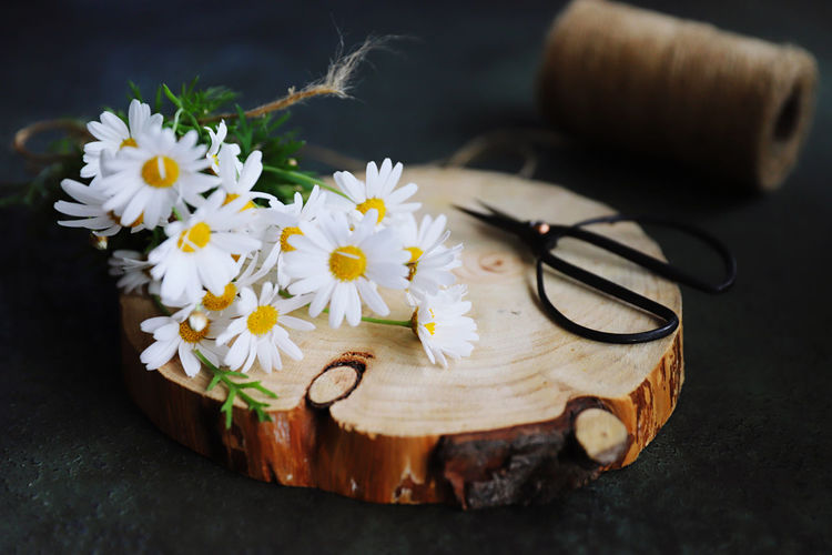 High angle view of white flower on table