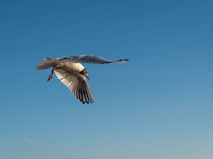 Low angle view of seagul flying in sky