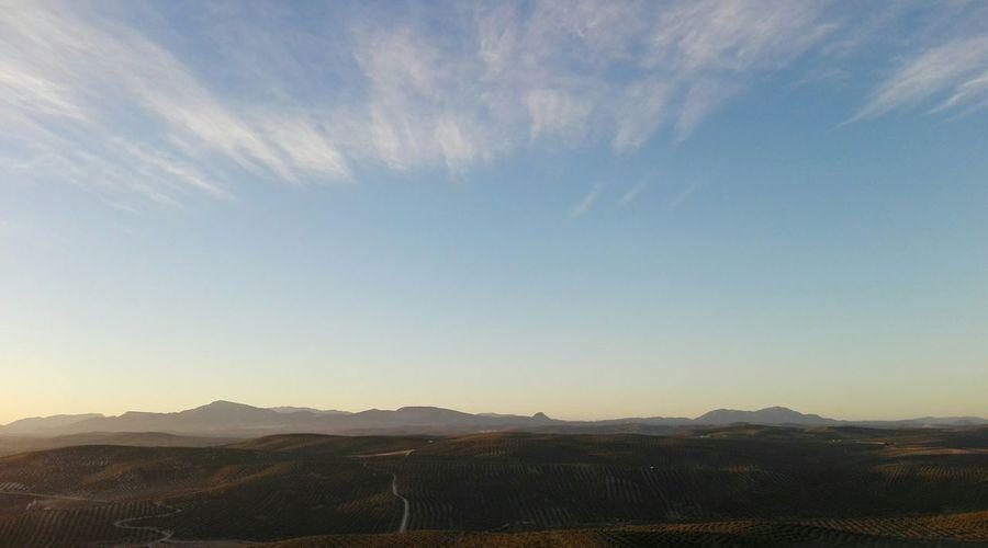 paisaje Nubes Tierra Olivos