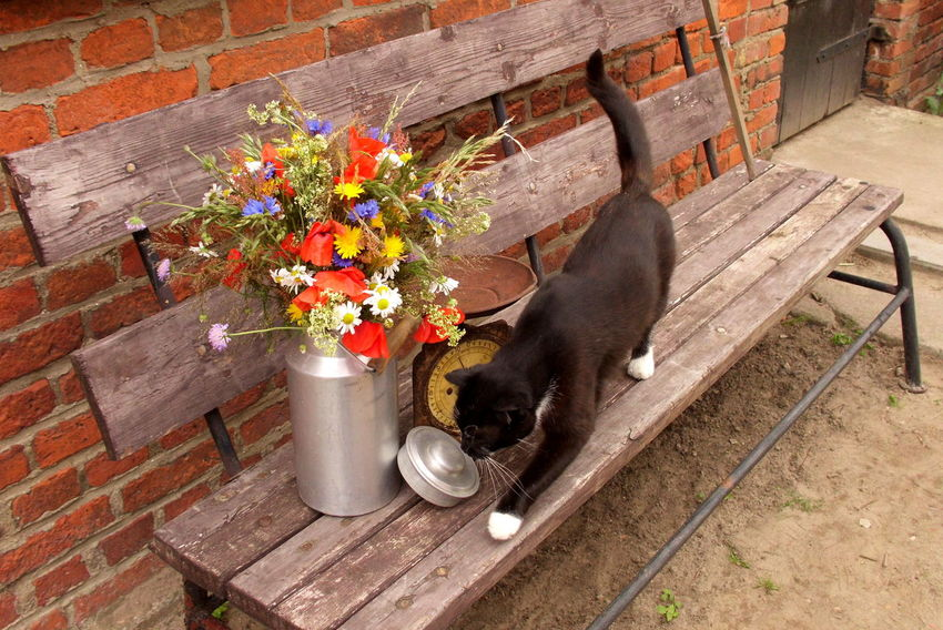 Animal Animal Themes Black Cat Cat Country Life Day Domestic Animals Flower Front Or Back Yard Growth Kitchen Scale Mammal Milk Churn Nature No People Outdoors Pets Plant Relaxation Resting Vintage Wood - Material Wooden